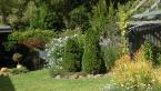 Robyn's Garden