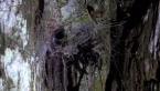 Northern Tree Funnel Web Spider