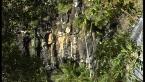 Basalt Columns- Cameron Falls